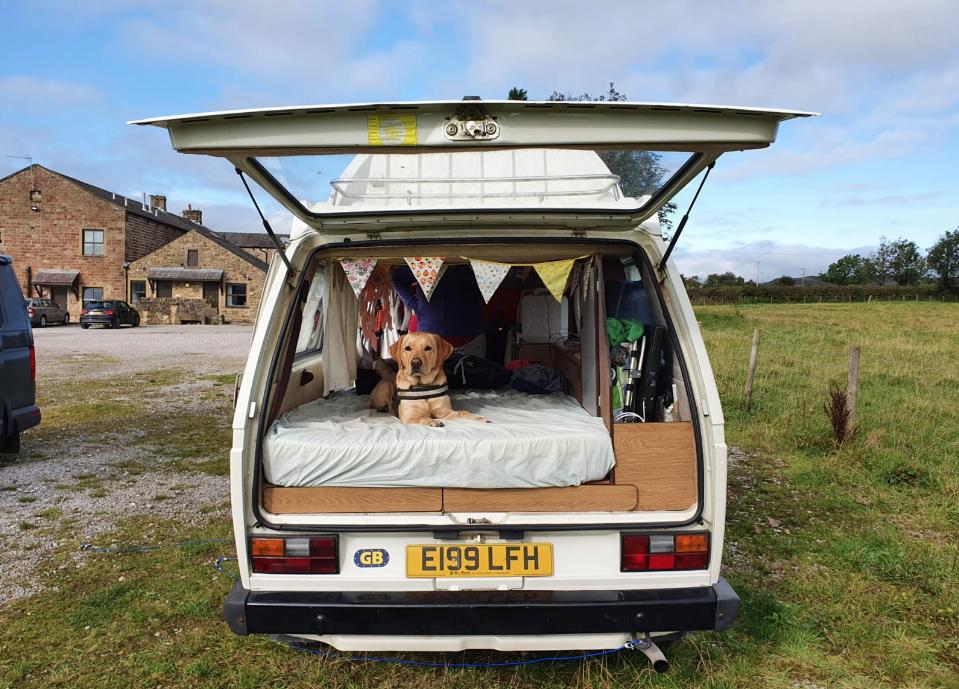 Camper van dog